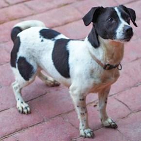 Rescue Dog Needing Home Ruby