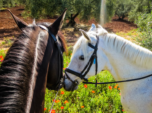 Horse-Riding-Holiday-Spain